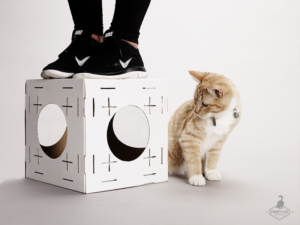 Projets de chats