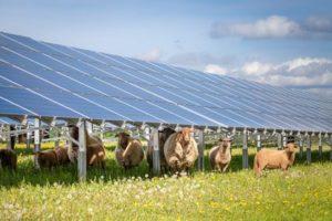 L'énergie solaire, ça se cultive !