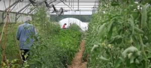 biofermes agriculture paysanne
